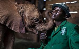 Hintergrundbilder Elefanten Jungtiere Mann Neger Der Hut