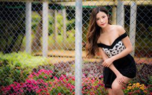 Bilder Asiaten Pose Zaun Blick Braune Haare junge frau