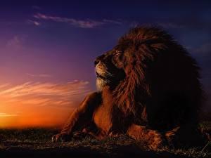 Hintergrundbilder Löwe Morgendämmerung und Sonnenuntergang Himmel Sonne Tiere