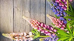 Fotos Lupinen Bretter Blumen
