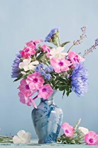 Hintergrundbilder Phlox Blumensträuße Vase Farbigen hintergrund Blüte