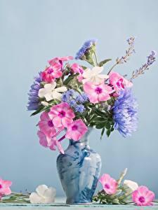 Hintergrundbilder Phlox Blumensträuße Vase Farbigen hintergrund