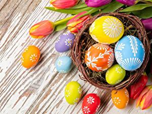 Fotos Feiertage Ostern Ei Nest