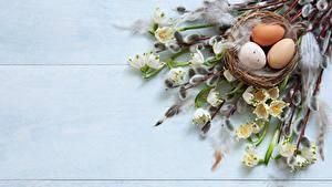 Fotos Ostern Ei Ast Nest verba