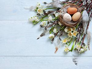 Photo Easter Eggs Branches Nest verba