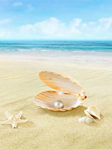 Hintergrundbilder Perlen Muscheln Meer Strände Sand Bokeh Natur