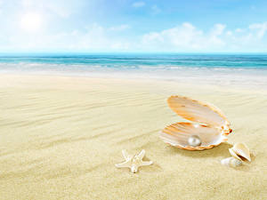 Hintergrundbilder Perlen Muscheln Meer Strände Sand Bokeh