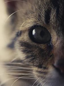 Hintergrundbilder Katzen Makrofotografie Augen Hautnah Blick Tiere