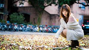 Bilder Asiatische Bokeh Sitzend Blatt Braunhaarige Mädchens