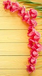 Fotos Tulpen Bretter Vorlage Grußkarte Blumen