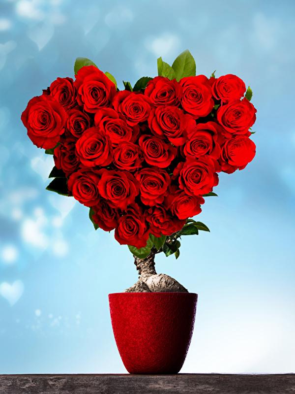 Hintergrundbilder Valentinstag Herz Rot Rosen Blumen Design 600x800