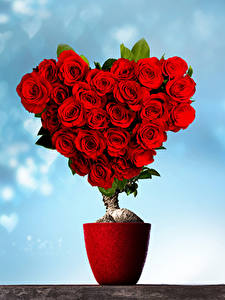 Pictures Valentine's Day Roses Design Heart Red Flowers
