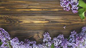 Bilder Syringa Bretter Ast Blumen
