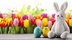 Hintergrundbilder Feiertage Ostern Tulpen Kaninchen Eier Sitzen Blüte