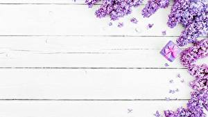Hintergrundbilder Syringa Bretter Blumen