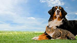 Image Dog Cat Two Grass animal