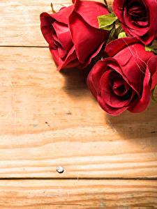 Hintergrundbilder Rosen Nahaufnahme Bretter Rot Blumen