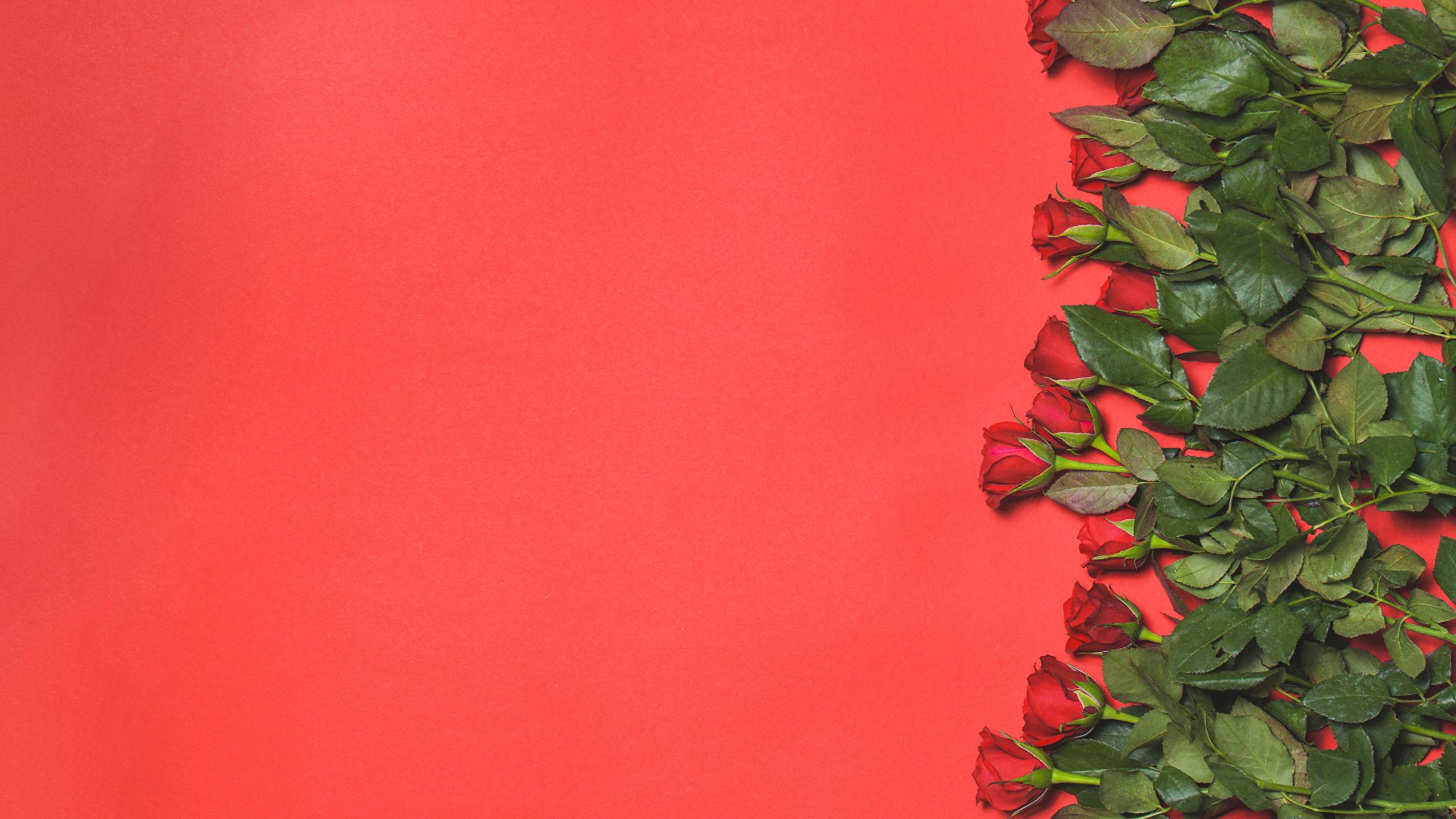 Fonds Decran 2560x1440 Roses Beaucoup Rouge Fond Rouge