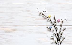 Hintergrundbilder Ostern Ei Ast verba