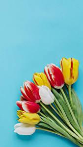 Bilder Sträuße Tulpen Farbigen hintergrund Blumen