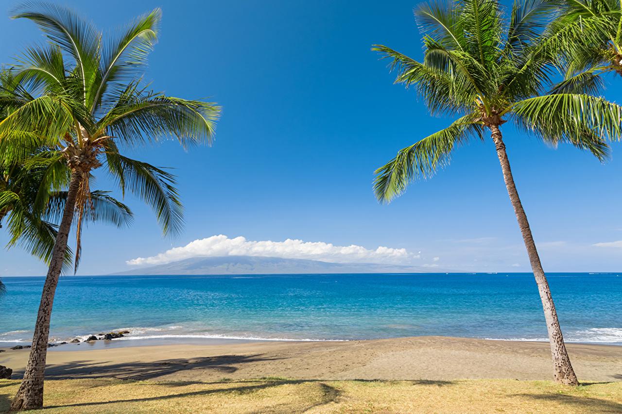 壁紙 熱帯 海岸 海 大洋 ハワイ州 ヤシ 砂 自然 ダウンロード