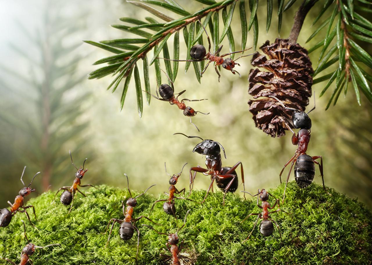 https://s1.1zoom.me/big0/101/Ants_lolita777_Moss_Pine_cone_526448_1280x912.jpg