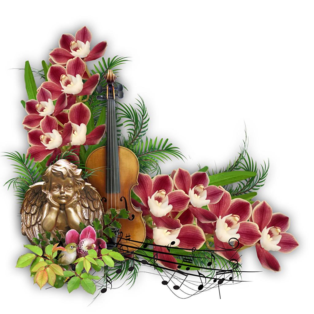 Bilder Fiolin Noter Orkideer Engler blomst Grener Hvit bakgrunn orkide engel Blomster