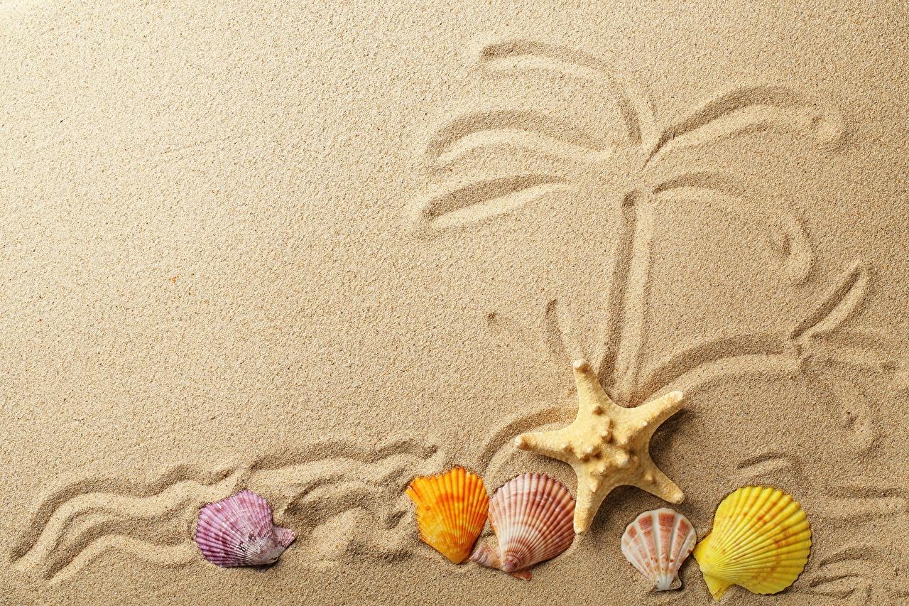 、貝殻、ヒトデ、砂、、