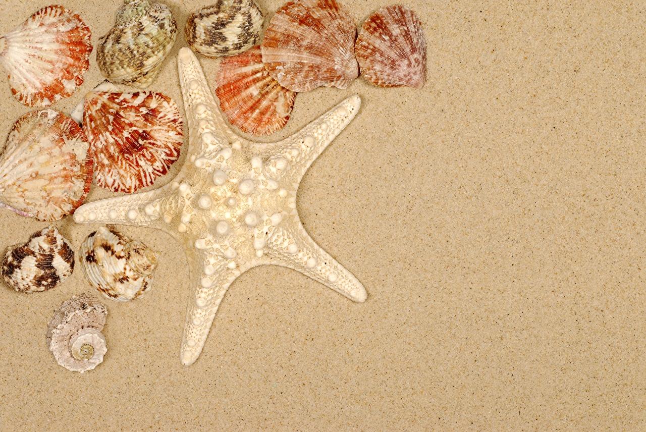 Foto Seesterne Sand Muscheln Vorlage Grußkarte