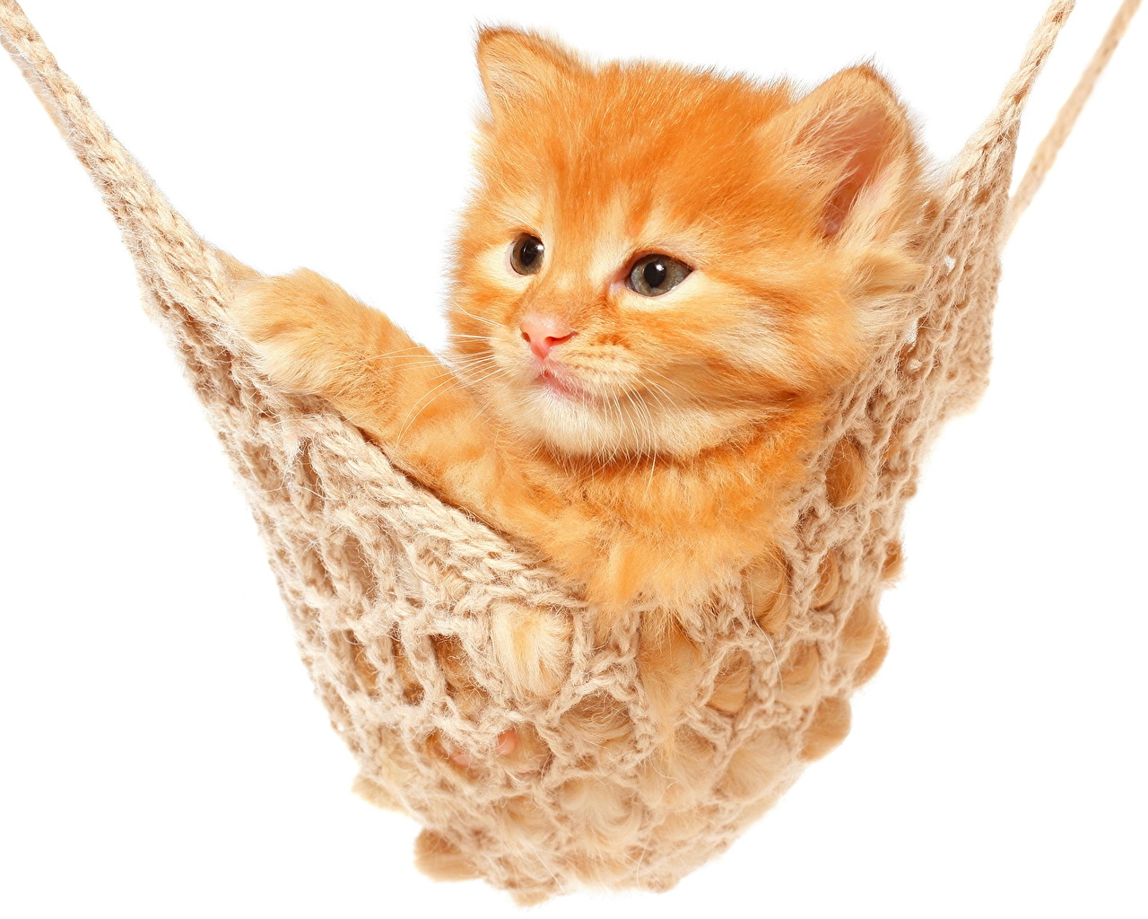 Wallpaper Kitty Cat Cats Ginger Color Animal