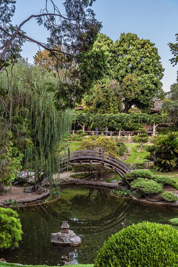 EE.UU. Jardíns Estanque Puentes Botanical Garden San Marino California Arbusto puente, Estados Unidos Naturaleza para móvil Teléfono