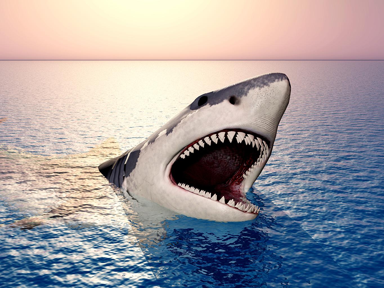 Fonds d'ecran Océan Requins Animaux 3D Graphiques télécharger photo