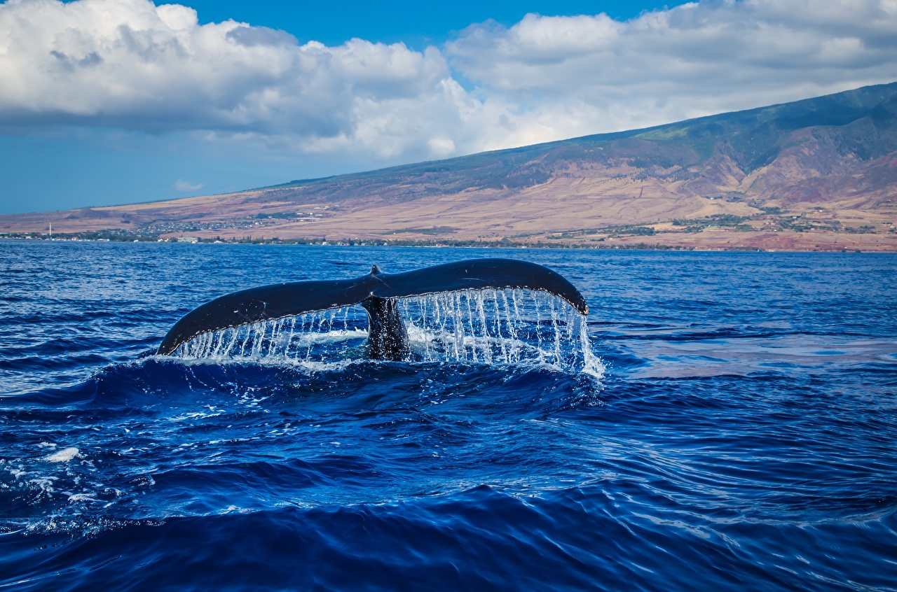 Picture Whale Tail Animals animal