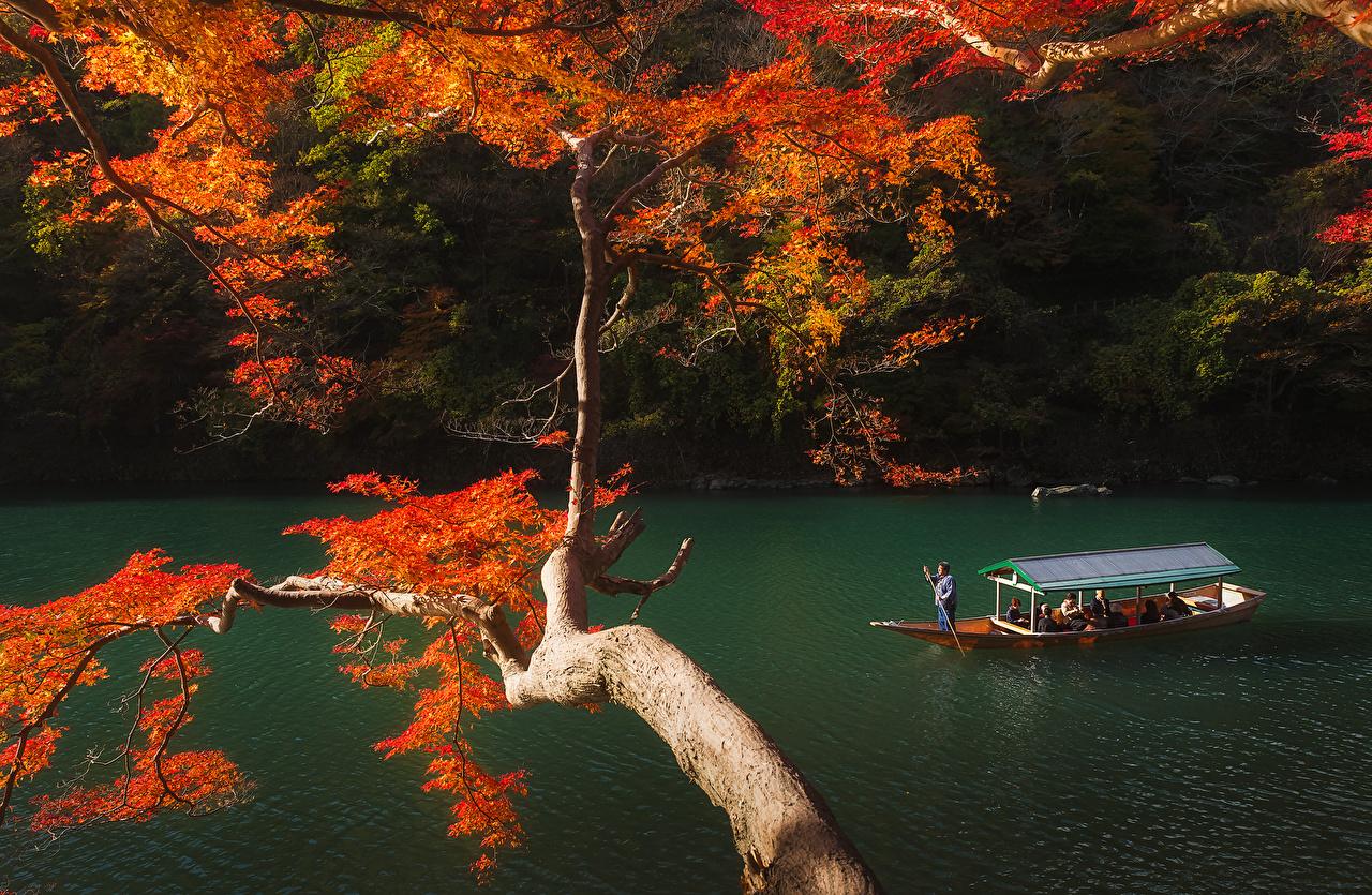 、日本、京都市、公園、秋、川、森林、ボート、枝、自然