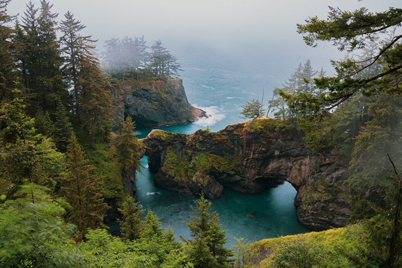 Pictures USA Fog Rock Nature Coast Trees Crag Cliff