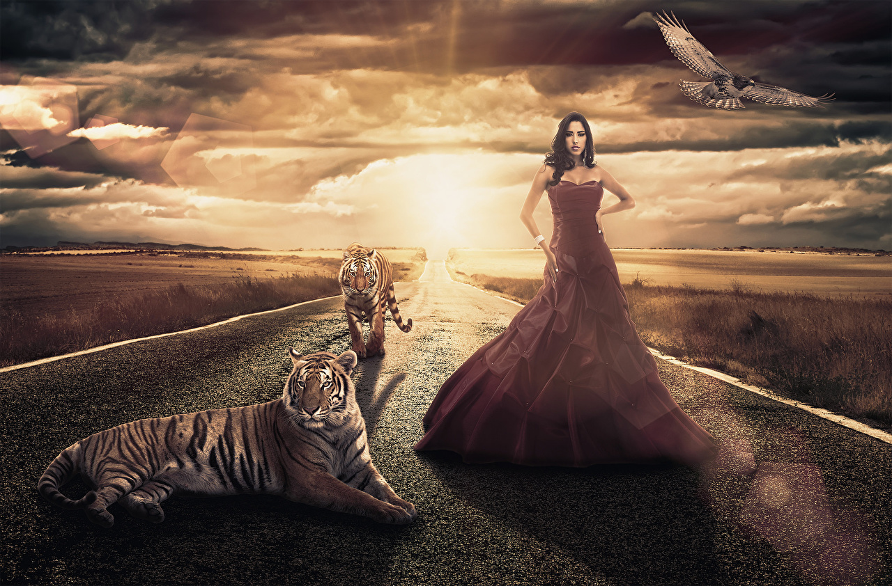 Photo Tigers Big cats Brunette girl Nature Fantasy young woman Sky Roads Sunrises and sunsets Clouds Animals Dress tiger Girls female sunrise and sunset animal gown frock