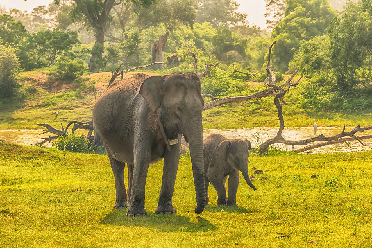 Fonds D Ecran Sri Lanka Parc Elephant Petits Yala National