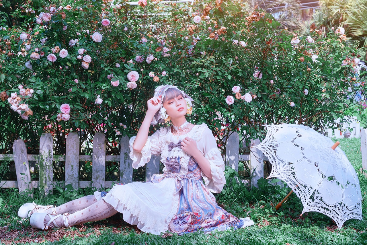 Bilder von posiert Rose Mädchens Zaun Asiaten Hand Gras sitzt Regenschirm Strauch Pose Rosen junge frau junge Frauen Asiatische asiatisches sitzen Sitzend