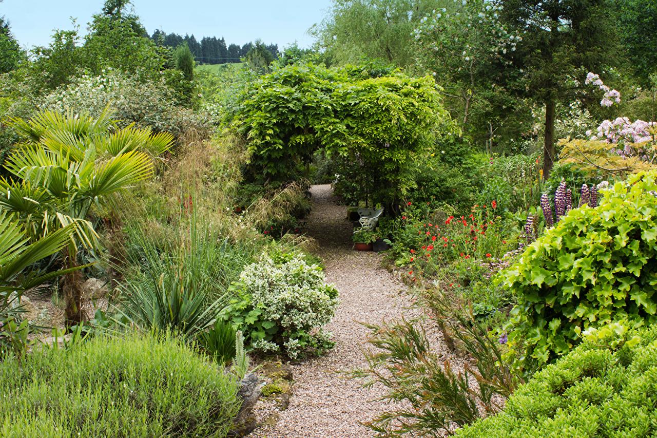Bilder Vereinigtes Königreich Mount Pleasant gardens Kelsall Natur Park Bäume Strauch