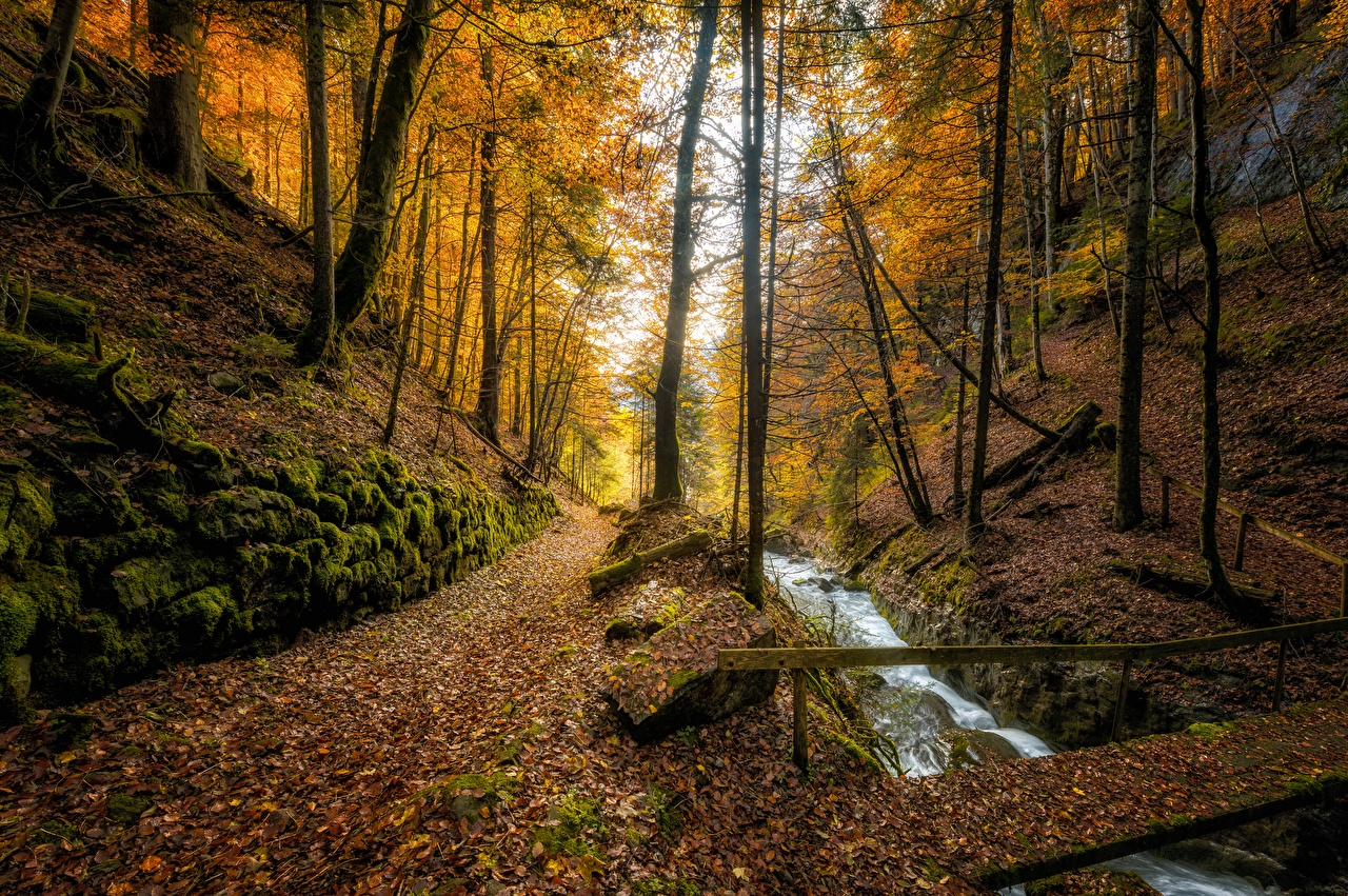 Photo Foliage Switzerland Autumn Stream Nature Forests Trees Leaf Creek brook Creeks Streams forest