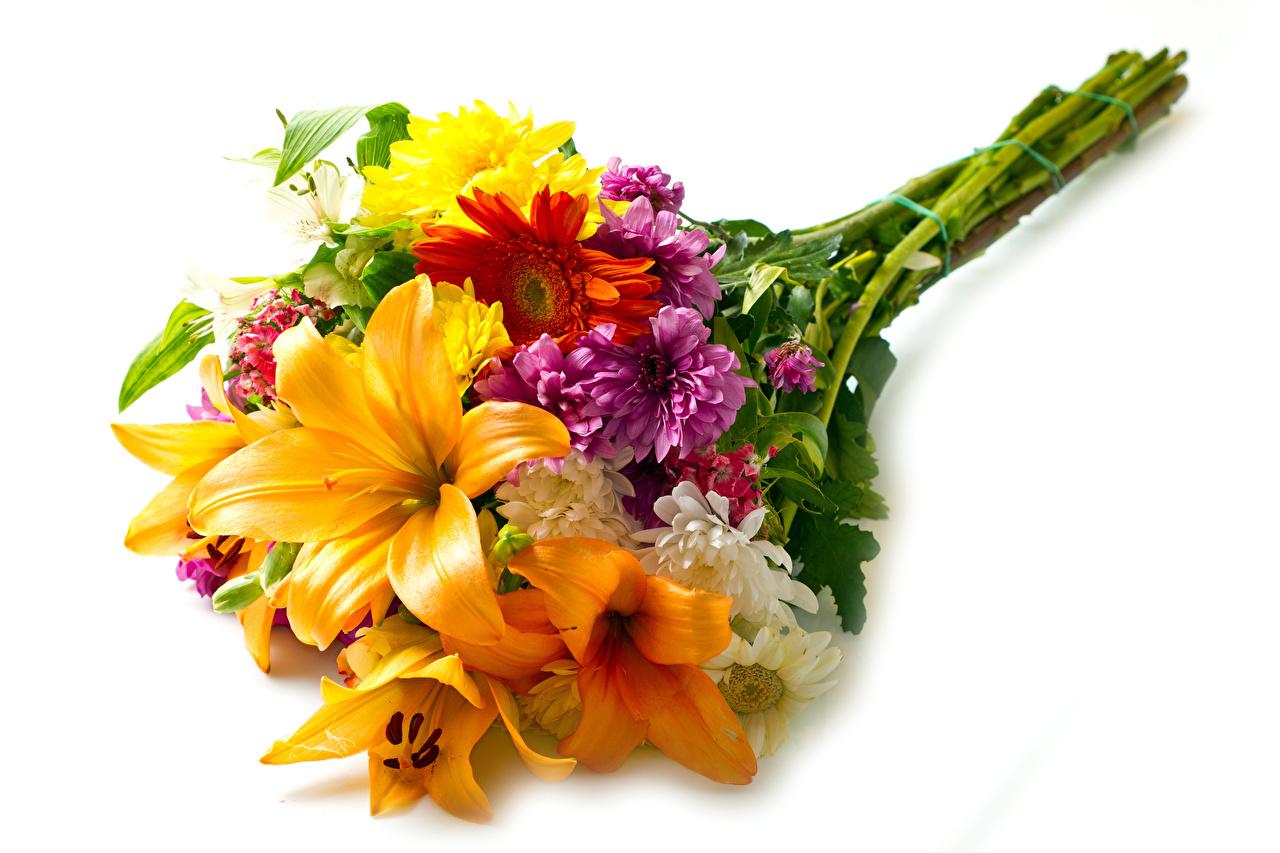Bakgrunnsbilder bukett Liljer Gerbera Blomster Krysantemum Hvit bakgrunn Buketter lilje blomst krysantemumslekta
