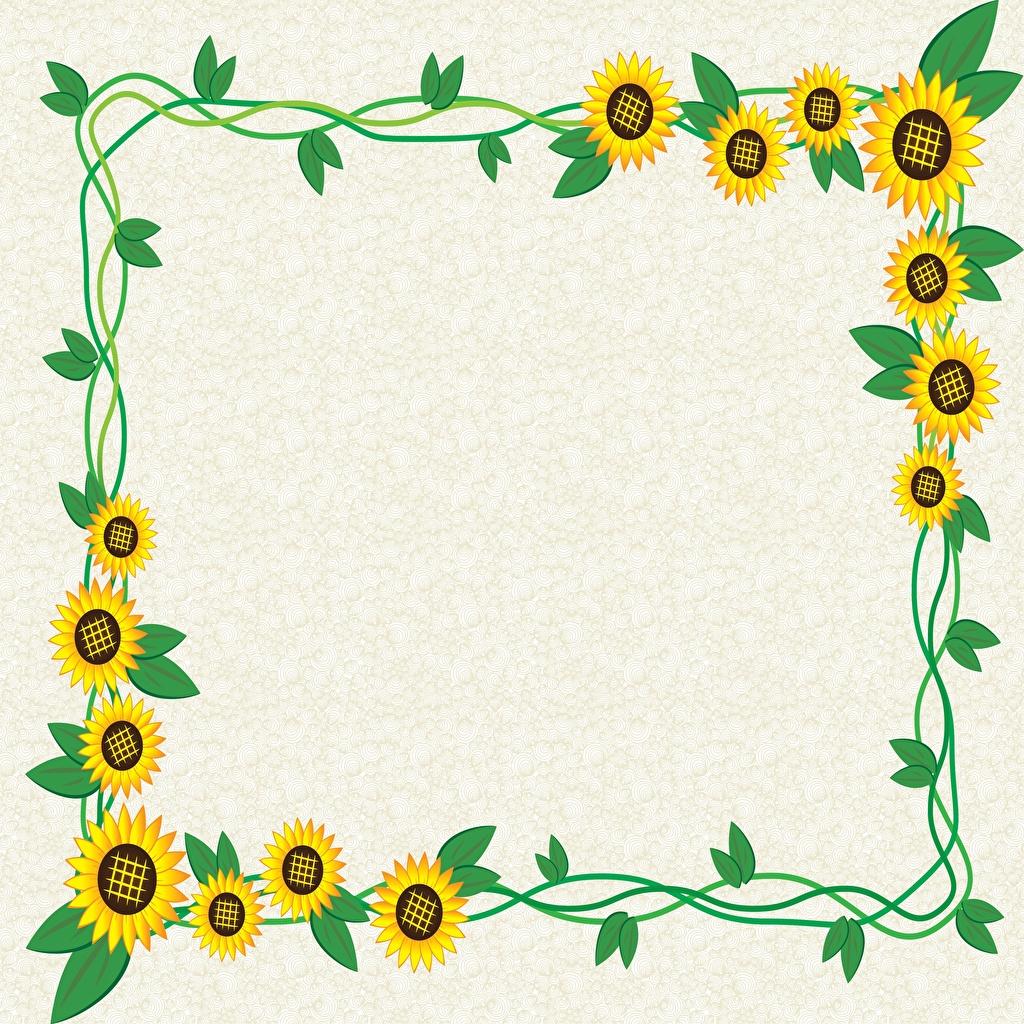 Bilder Blatt Blumen Sonnenblumen Vorlage Grußkarte Blattwerk Blüte