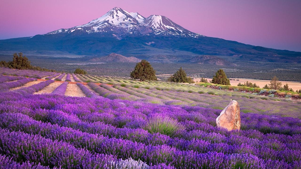 Bilder von Frankreich Provence region Natur Gebirge Acker Lavendel Horizont Berg Felder