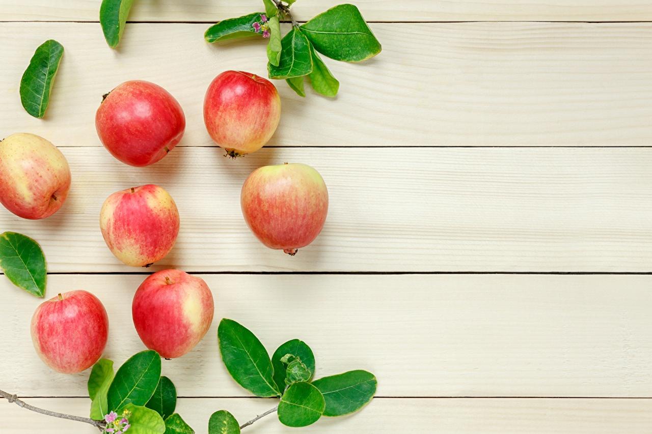 Picture Dogue de Bordeaux Apples Food