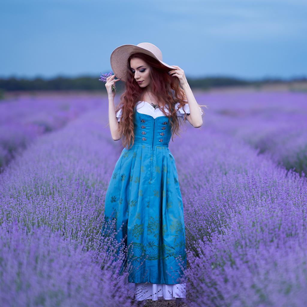 Desktop Hintergrundbilder Bokeh Pose Der Hut Mädchens Felder Lavendel Kleid unscharfer Hintergrund posiert junge frau junge Frauen Acker