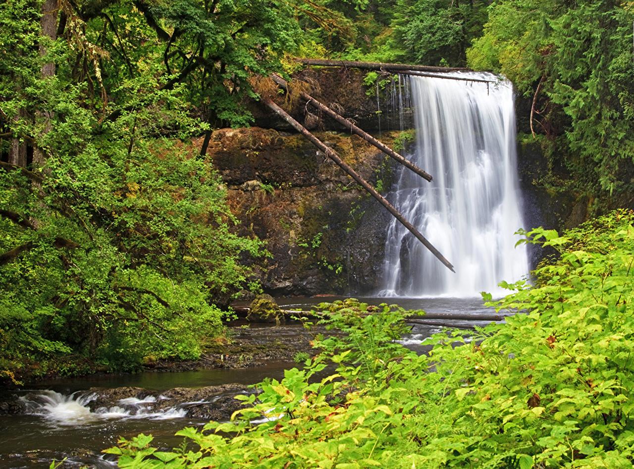 Images USA Silver Falls Oregon Nature Waterfalls Parks park