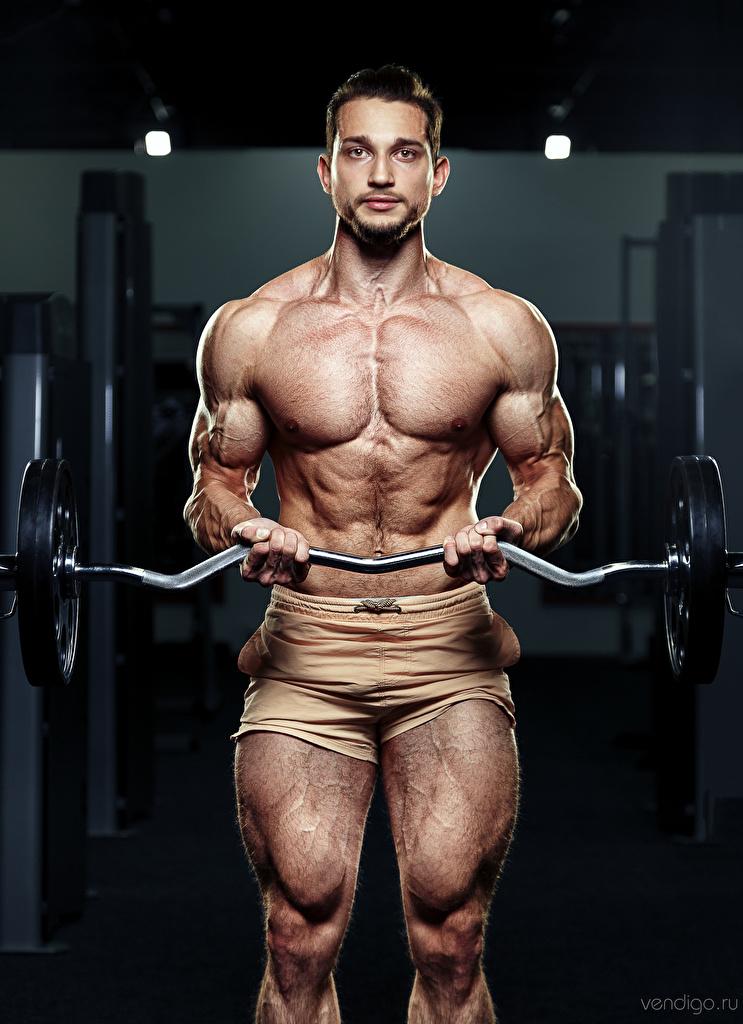 Bilder von Mann Muskeln Evgeniy Bulatov Sport Hantelstange Bodybuilding Blick  für Handy sportliches Starren