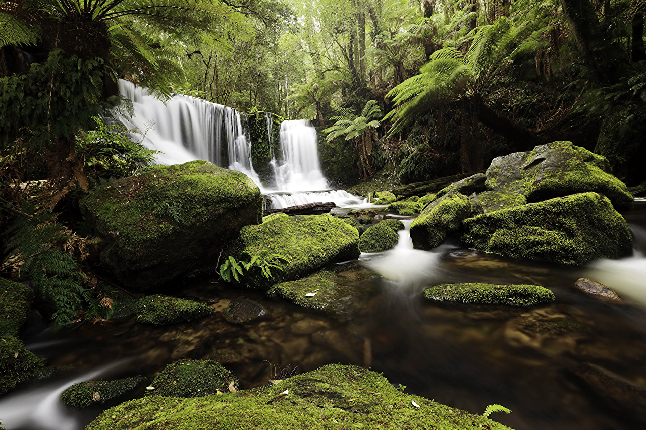 Sfondi Natura cascata foresta Pietre Muschio Cascate Foreste I muschi