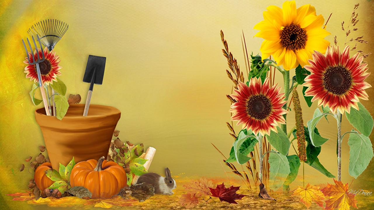 Foto Zucca Autunno fiore Pittura Fiori