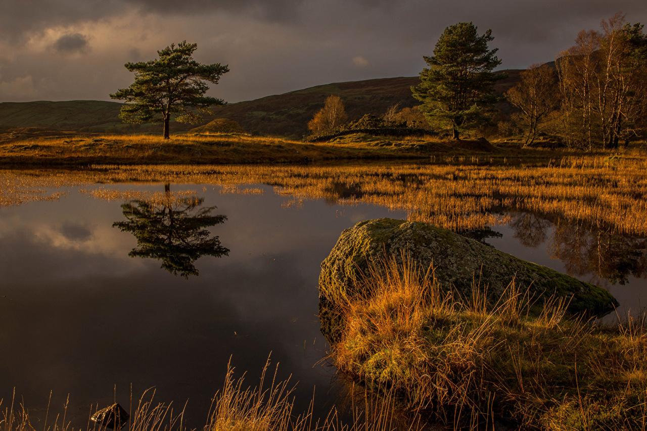 Foto England Natur Sumpf Steine Bäume Stein